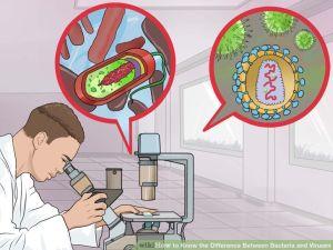 bacteria-viruses